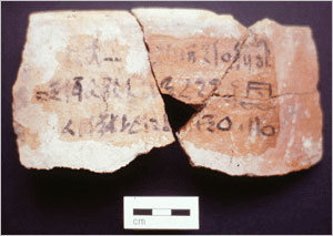 Sherds from a Canaanite amphora with a hieratic inscription listing the vessel contents: . Photograph courtesy of the Petrie Museum.