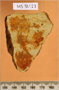 Resinous residue on the inner surface of a Canaanite amphora sherd