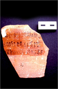 (Fig.20) Canaanite amphora sherd from Amarna with inscription mentioning nhh oil. Photograph courtesy of the Petrie Museum.