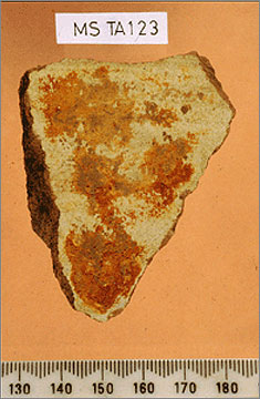(Fig.8) Canaanite amphora sherd from Amarna with resinous residue visible on its interior surface